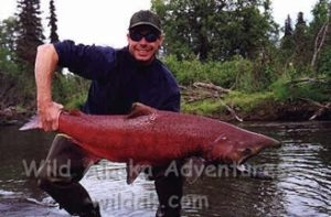 huge 50 lb king salmon