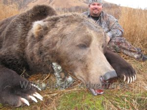 Huge kodiak Brown bear B&C record