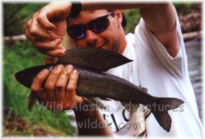 Alaska Arctic grayling fishing