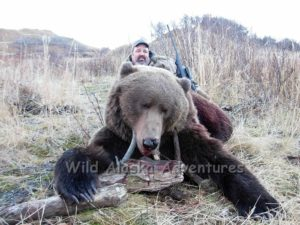 nice Kodiak brown bear 15 minute pack to lodge