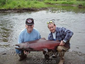 Huge Aalska King salmon